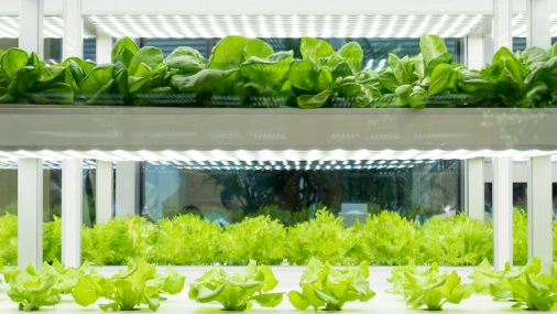 Discover smart LED grow lights from OSRAM