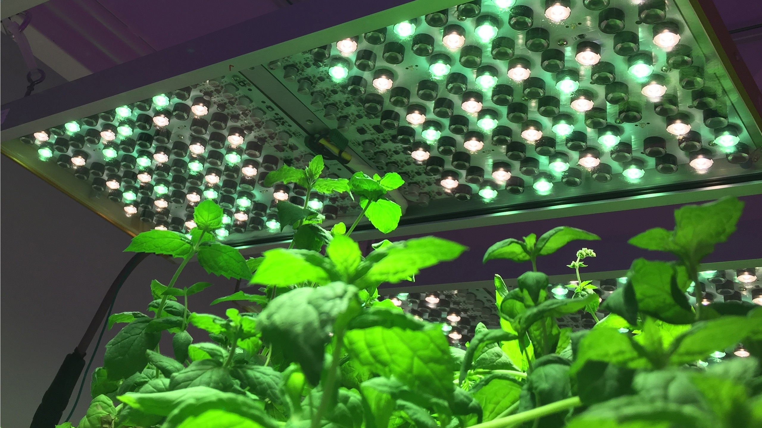 Osram smart LED grow lights